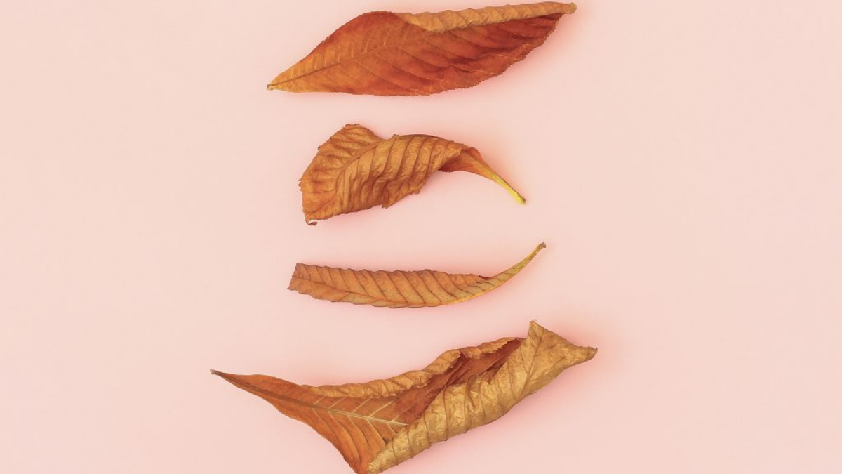Ready to turn over a new leaf with your Instagram? Check out the #HelloFallChallenge
